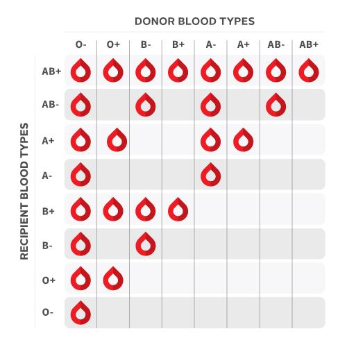 Quest Ce Que Le Groupe Sanguin Canadian Blood Services