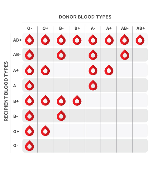 What s my blood type canadian blood services
