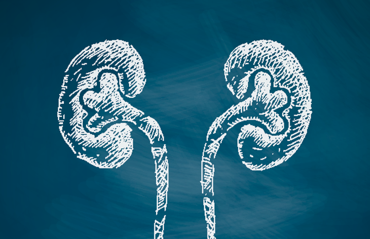 Kidney graphic