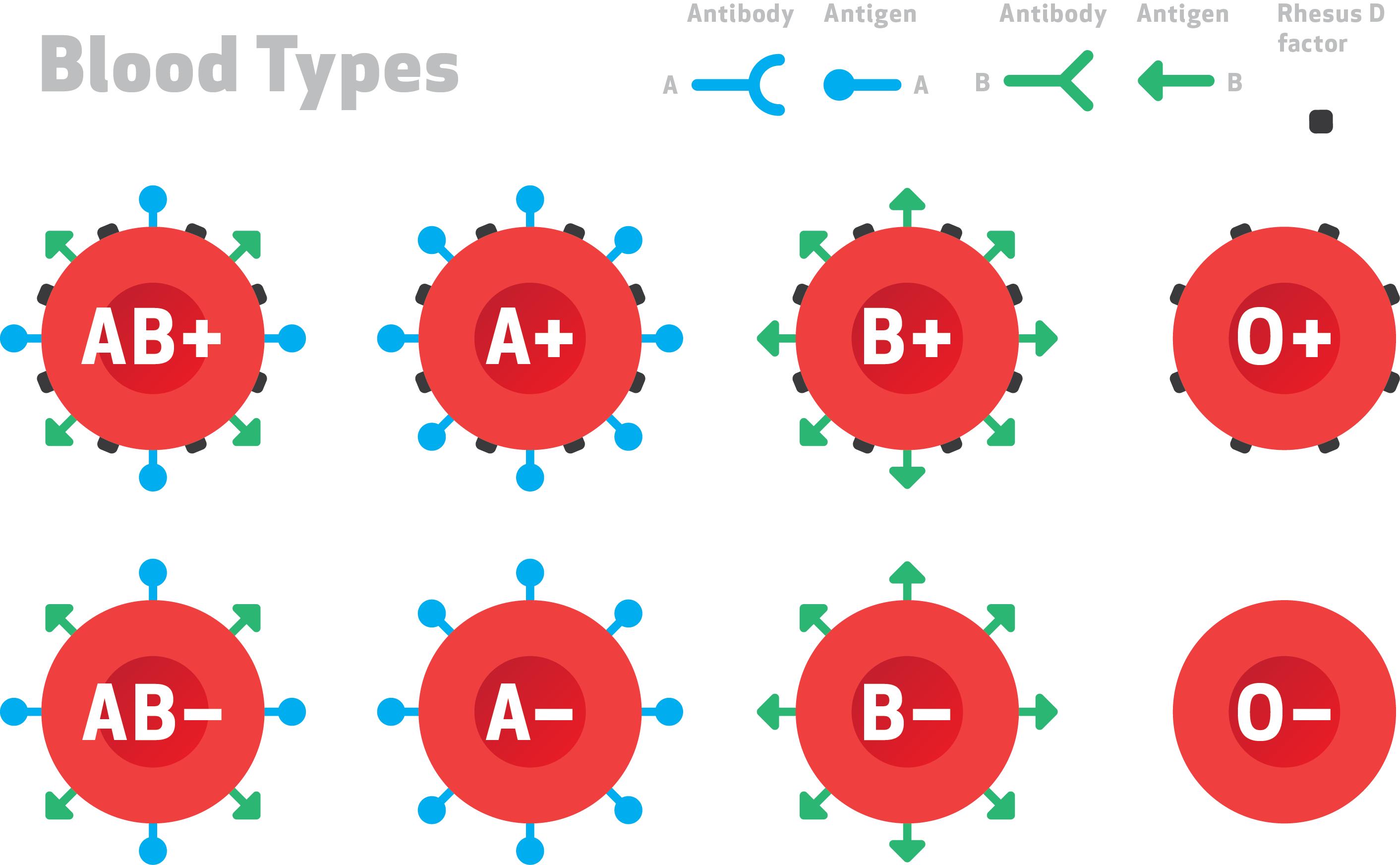 ABO rh Blood Types