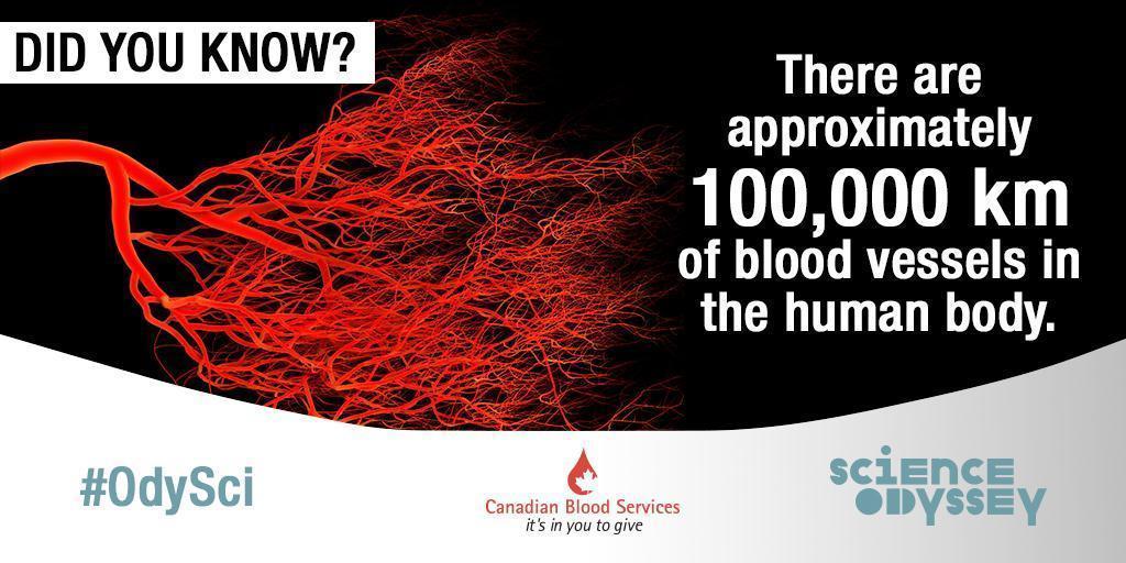 Science Odyssey 2016 - blood vessels