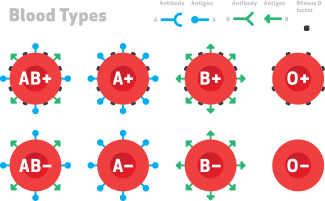 Many people know about the ABO blood groups (blood types A, B, AB and O). But in reality, that's just a really small subset of the groups of antigens that we have on our red blood cells. There are about 35 different red blood cell group families and over